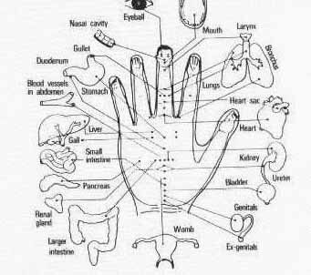 hand acupressure chart with organs