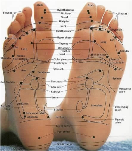 Foot reflexology chart to map sole zones and organs