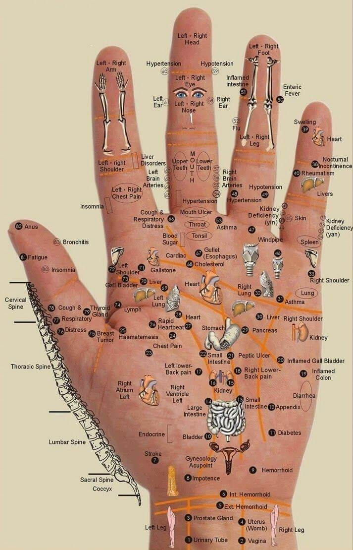 Hand chart to map acupressure points and organs